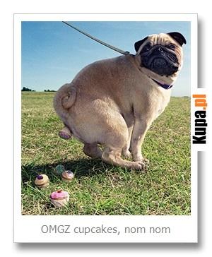 OMGZ cupcakes, nom nom