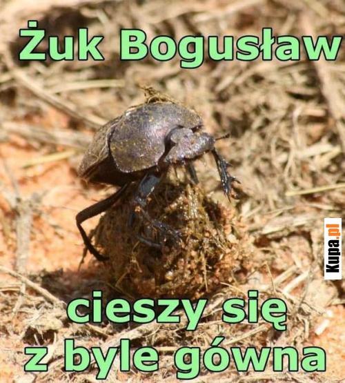 Żuk Bogusław...