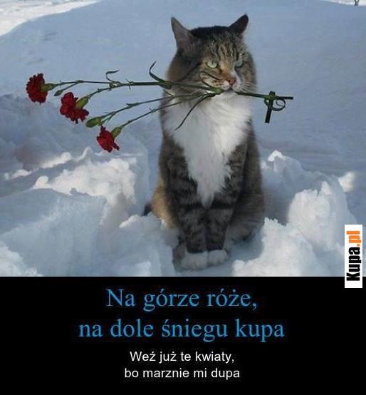 Na górze róże, na dole śniegu kupa, weź już te kwiaty...
