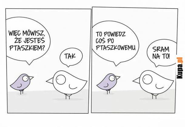 Powiedz coś po ptaszkowemu