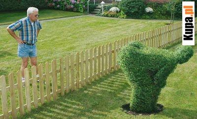 Miłość sąsiedzka - uzdolniony ogrodnik