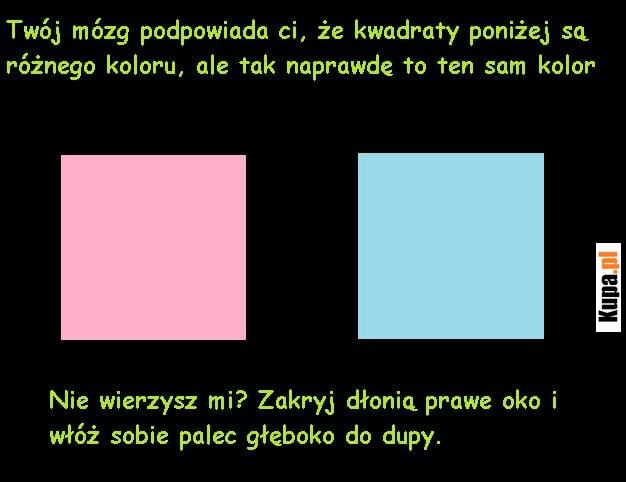 Twój mózg podpowiada ci, że kwadraty poniżej są różnego koloru..