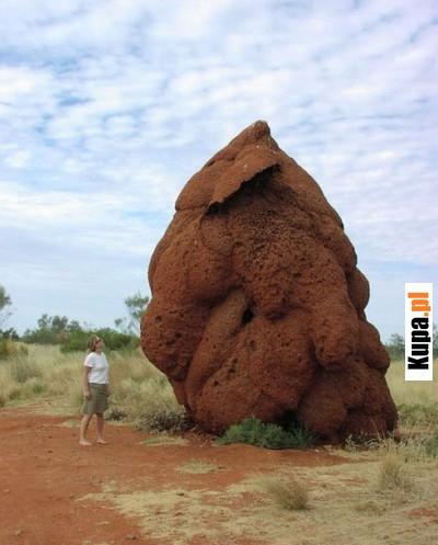 Skamieniała kupa Mastodonta